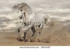 Galloping Horse Stock Photos, Images, & Pictures | Shutterstock