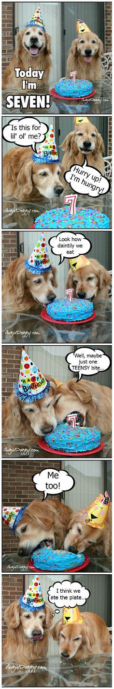 Golden retriever birthday party!