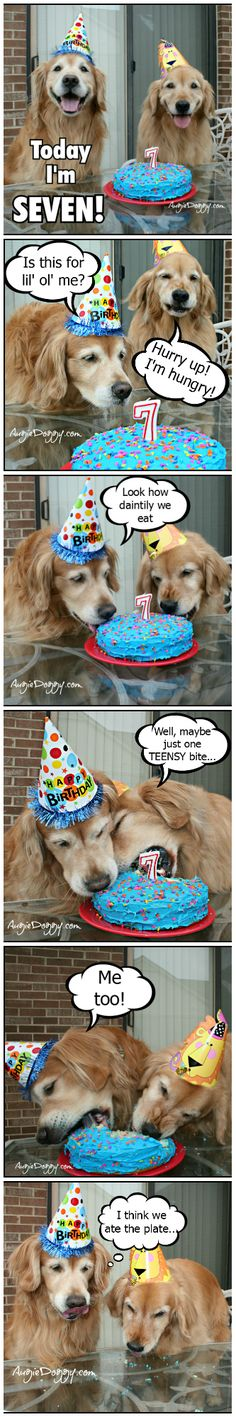 Golden retriever birthday party!