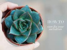 succulents cacti images -
