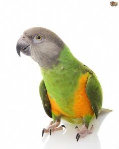 65 Best Beautiful Parrots images in 2019 ec1ed76efc
