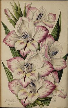 Lily Wallpaper, Tattoos, Flowers, Tatuajes, Florals, Tattoo, Tattoo Illustration, Flower, Irezumi