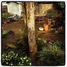 Some afternoon sun in the Fishingham Garden | 02.28.13 | Photo by Jeff Fisher