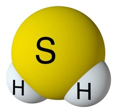 Hydrogen sulfide gas is a common health risk in household water. Its distinctive odor, like rotten eggs, can easily distinguish it. Online Training Courses, Online Courses, Hydrogen Sulfide, Chemical Property, Digital Certificate, Course Catalog, Safety Training, Organic Matter, Health And Safety