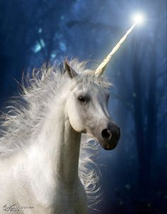 "Unicorn - """"Wherever they may have come from, and wherever they may have gone,  unicorns live inside the true believer's heart.  Which means as long as we can dream, there will be unicorns.""  ~ Bruce Coville"