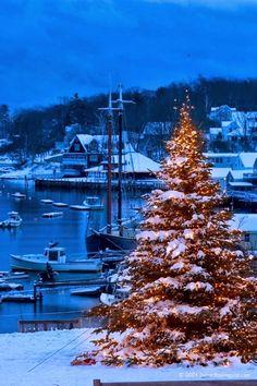 Christmas Tree - Camden, Maine - New England