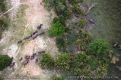 #Elephants @ Okavango Delta in #Botswana. See #Okavango travel guide: http://www.safaribookings.com/okavango