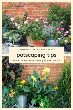 Ideas for showing pots - to frame a front porch, add colour to a patio or terrace, fill a gap in a flower border and tips for potscapes, the art of arranging groups of pots. #gardening #containergarden #backyard #middlesizedgarden Garden Ideas Budget Backyard, Easy Garden, Garden Planning, Backyard Landscaping, Patio Plants, Garden Planters, North Facing Garden, Garden Renovation Ideas, Low Maintenance Garden Design