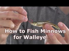 How to fish for Walleye! Using Bottom Bouncers and Lindy Rigs effectively! - Famous Last Words Walleye Jigs, Walleye Fishing Tips, Pike Fishing, Bass Fishing Tips, Fishing Rigs, Best Fishing, Fly Fishing, Fishing Stuff, Trout Fishing