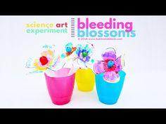 STEAM Project Idea: Bleeding Blossoms - Babble Dabble Do