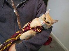 """30фотографий, которыми коты могут гордиться! """"Гарри Поттер"""")))"""