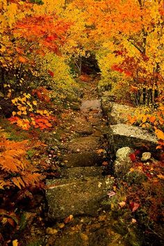 Beautiful path in the Fall.