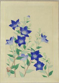 Ito_Nisaburo-No_Series-Chinese_Bell_Flower-00044321-121102-F12.jpg (859×1200)