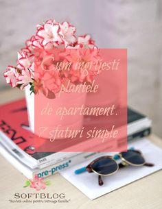 Cum ingrijesti plantele de apartament. 7 sfaturi simple Bel Air, Round Sunglasses, Plant, Round Frame Sunglasses