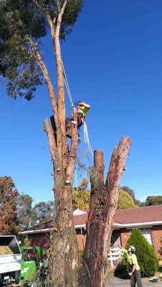Tree lopping is a great way to go about removing a tree. Doing this can ensure that things are done safely. This is the way that all tree services should go about things. If all tree services did this, then things could be done safer. Tree Trimming Service, Tree Removal Service, Tree Lopping, Tree Specialist, Tree Pruning, Tree Care, Removal Services, Chainsaw, Eagles