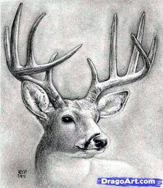 how to draw a deer head, buck, dear head step 11