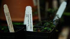How-Tuesday: Light Bulb Terrariums   The Etsy Blog