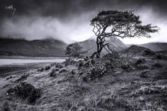 Highland Wither by K. R. Whitley on 500px