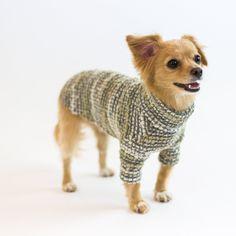 Bond Shiba Inu, Maltese, Poodle, Chihuahua, Wool Blend, Bond, Corgi, Cute Animals, Size Chart
