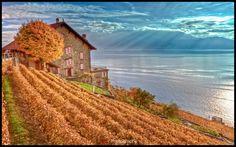Lavaux Vineyard, Vaud, Switzerland (UNESCO, Suisse)