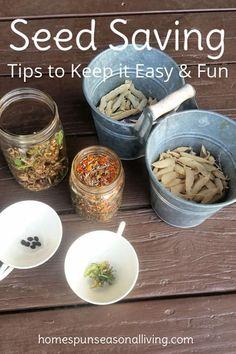Seed Saving Tips for