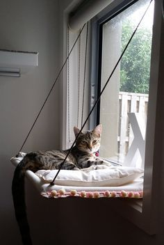 Hey, I found this really awesome Etsy listing at https://www.etsy.com/listing/238683052/window-cat-hammock-with-cushion