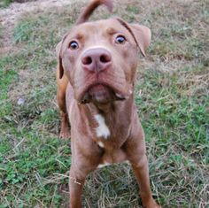 Kahleaf is very energetic and does great outside of the cage. Once Kahleaf gets out side he loves to run, run, run. Kahleaf is decent on the...