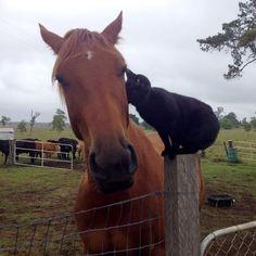 Champy e Morris, uma amizade animal e muito verdadeira!