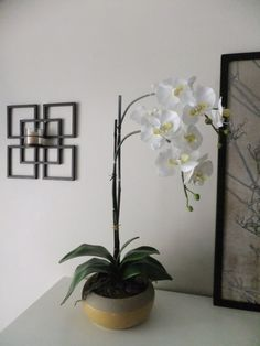 26 White Silk Phalaenopsis Orchid by FineOrchidCreations on Etsy