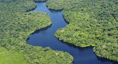 La mitad de las especies de árboles del Amazonas, en peligro de extinción