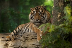 Periyar Tiger Reserve - situated in Thekkady, Kerala, As the best managed animal reserve in India, this is the only tiger reserve where one can watch animals in their natural habitat at close quarters from a boat.
