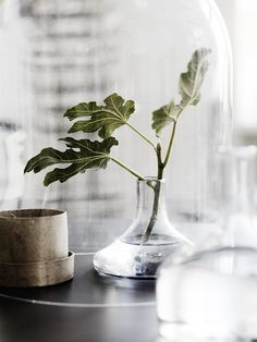 Vijgenblad