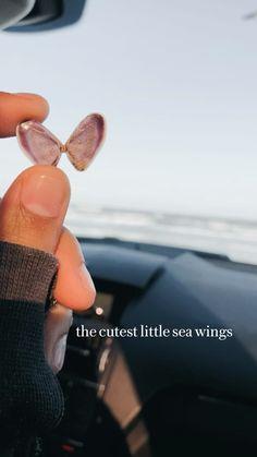 Artist Wall, Fairy Wings, Shell Crafts, Beach Waves, Beach Pictures, Sea Shells, Cute, Beach Photos, Seashells