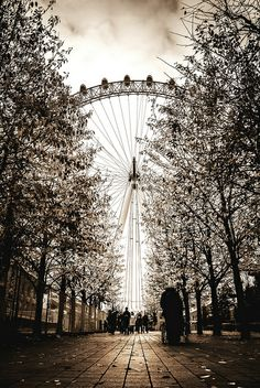 Path To The Eye by Pixelglo Photography, via Flickr❤️