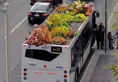 Sem espaço para praças? Cidades podem investir em jardins nos tetos dos ônibus