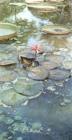 Steve Hanks - Water Lilies in Bloom