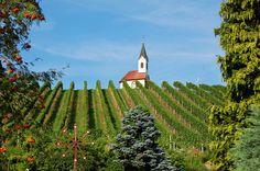 Et kapell midt blant vinranker i St. Stefan, Steiermark, Østerrike. Foto: Arnold Weisz ©