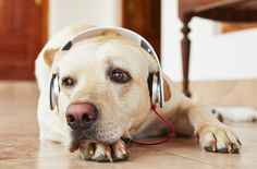 Pump up the tunes. Music soothes the stressed-out beast… or in this case, an anxious pooch.