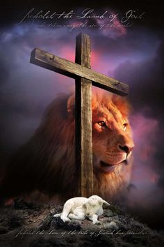 """John 1:29 English Standard Version (ESV) The next day he saw Jesus coming toward him, and said, """"Behold, the Lamb of God, who takes away the sin of the world! Revelation 5:5 King James Version (KJV) And one of the elders saith unto me, Weep not: behold, the Lion of the tribe of Judah, the Root of David, hath prevailed to open the book, and to loose the seven seals thereof. Lion Images, Lion Pictures, Jesus Pictures, Christian Warrior, Christian Art, Bible Art, Bible Scriptures, Images Du Christ, Lion Of Judah Jesus"""