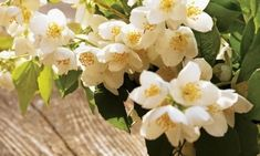 Полезные свойства чая из цветков жасмина