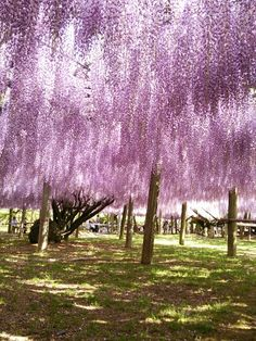 河内藤園は北九州市、福岡県にあります