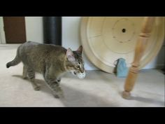 In Order To Get Fed, This Cat Has To Solve A Clever Puzzle