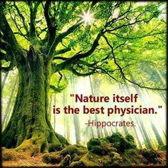 256 Best Healing Power Of Nature Images In 2019 Healing Power