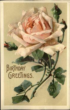 Pink Rose A/S Klein BIRTHDAY Greeting Embossed c1910 Postcard