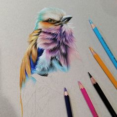 Bird, coloured pencil drawing, pretty awesome.