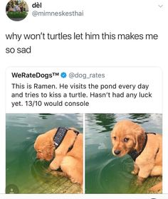 Things that make you go AWW! Like puppies, bunnies, babies, and so on. A place for really cute pictures and videos! Funny Animal Memes, Cute Funny Animals, Dog Memes, Cute Baby Animals, Funny Cute, Funny Dogs, Animals And Pets, Funny Animal Pictures, Cute Puppies