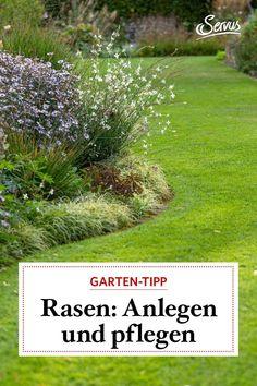 Damit im Sommer ein saftiges Grün in unseren Gartenwiesen wächst und gedeiht, ist eine die Rasenpflege im Frühjar unabkömmlich. Wann man ihn anlegt und pflegt, lesen Sie gleich hier. Tips And Tricks, Reading, Summer, Nature, Deco, Recipies