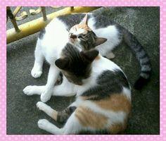 my cat buddies,peachie and blitch
