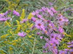 Use the list to locate your region and state to quickly see all the wonderful native plant resources in your region.