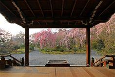 Spring Tenryū-ji (天龍寺)